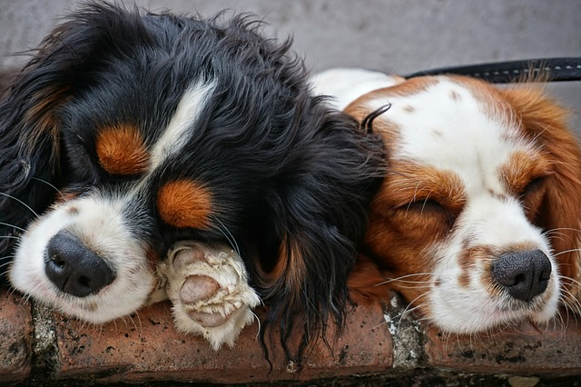 The Best Dog Dewormers for Your Pet (2019)