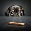 The Best Healthy Dog Treats for Conscientious Owners
