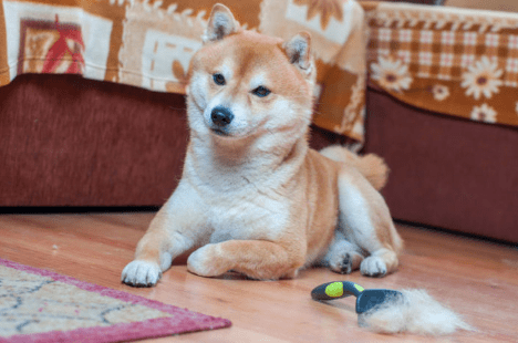 The Best Slicker Brushes for Grooming Your Dog (2019 Guide)