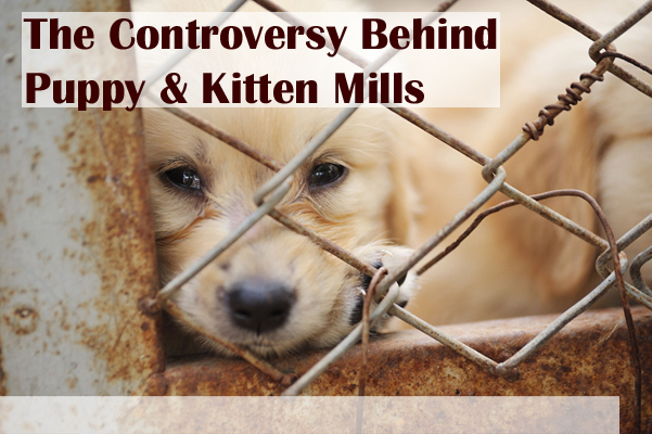 The Controversy Behind Puppy Mills and Kitten Mills