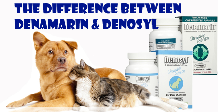 The Difference Between Denamarin and Denosyl