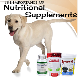 The Importance of Nutritional Supplements