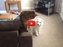 The Only Thing This Playful Puppy Wants is to Be Friends With This Cute Cat
