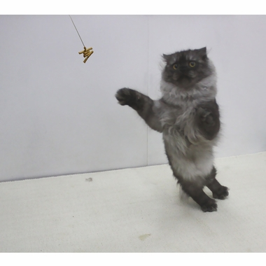 CATDANCERORIGINAL