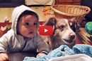 "The Parents Are Trying To Teach The Baby To Say ""Mama"" But You'll Laugh At The Dog!"