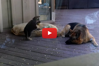 The Puppy Doesn't Want To Nap, But Wait Until You See What Mom Does About It