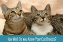 The Purr-fect Cat Breed Quiz: Test Your Knowledge!