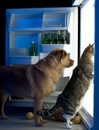 The Strangest Things That Pets Eat