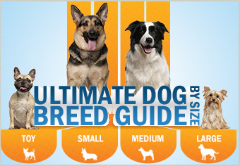 The Ultimate Dog Breed Guide