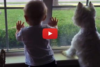 There Is A Mysterious Animal In The Yard, Watch What The Dog And Baby Do!