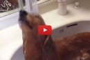 These Adorable Dogs Absolutely Love Taking Showers!