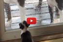 These Adorable Tiny Dogs Think They're Much BiggerThan They Are!