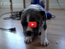These Adorably Tired Puppies & Kittens Try to Fight Their Tiredness and Fall Asleep Standing Up!