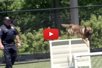 These Canines Go Through Intensive Training To Be Police Dogs