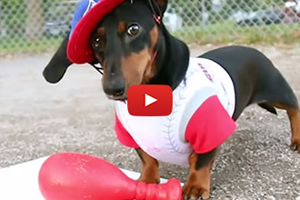 These Dachshunds Are Going Out To The Ball Game... And We Think It's Adorable!