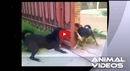 These Dogs Acting Tough Through an Open Fence Is Sure to Make You Smile!!