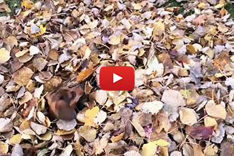 These Dogs Are Definitely In Love With Fall!