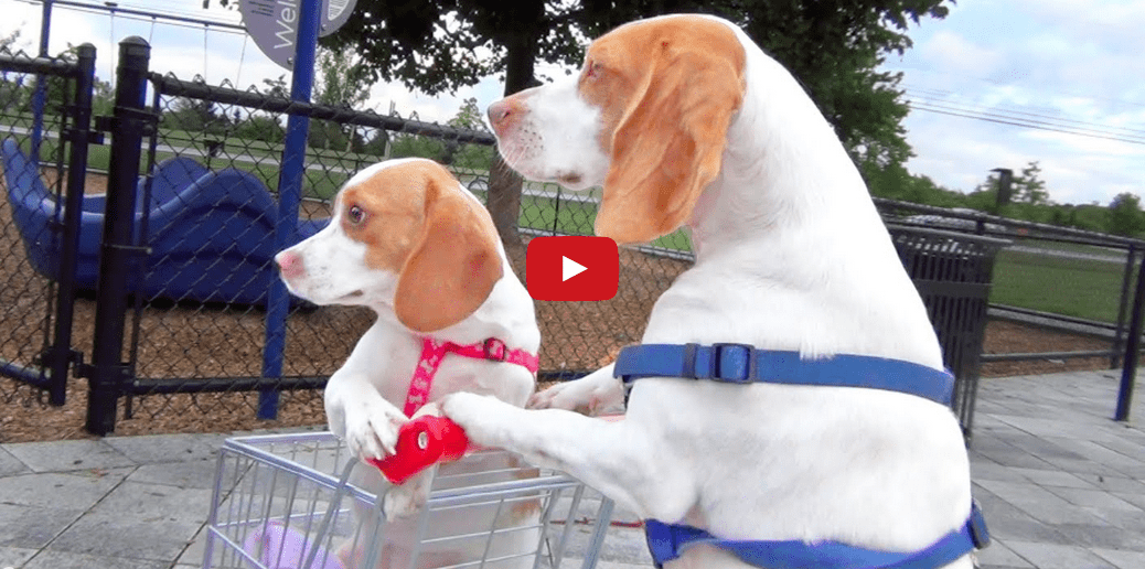 These Dogs Are Out Shopping for Adventure- And It's Adorable!!