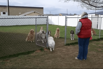 These Dogs Are Surprisingly Receptive to Roll Call- But the Last Dog's Reaction is Sure to Make You Smile!