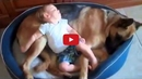 These Dogs Love Babies And It's The Most Adorable Thing You'll Ever See!