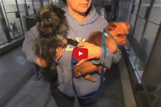 These Dogs Were About to Be Put Down Until This Amazing Organization Stepped In