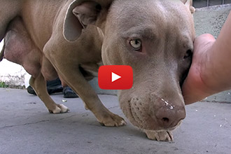 These Homeless Puppies Are Trapped Under A House, Until Rescuers Save The Day