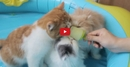 These Pets Sharing a Popsicle is Too Cute for Words! Absolutely Adorable!!