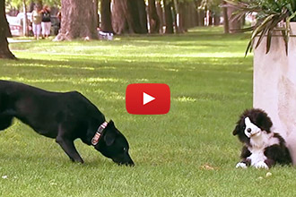 These Real Dogs Get Hilariously Pranked by an Adorable Stuffed Dog Toy!