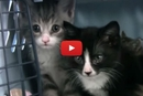 These Recently Adopted Kittens Are Getting an Amazing New Chance at Life!