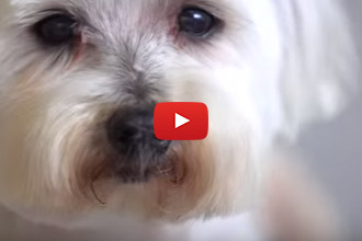 These Shelter Dogs Get Makeovers That Saved Their Lives!
