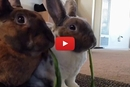These Two Bunnies Share Lunch in the Most Adorable Way!