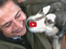 This Adorable Alaskan Malamute Does the Cutest Thing to Get His Dad's Attention