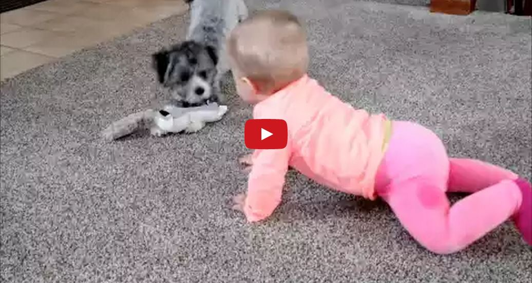 This Adorable Baby Laughs Hysterically While Playing With Her Puppy! Too Cute!!