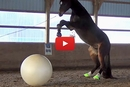 This Adorable Horse Has a Blast Playing With His Big Bouncy Ball!