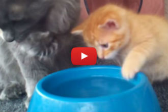 """This Adorable Kitten Learns to Drink Water and Wins """"Cutest Animal Ever"""" Award!"""