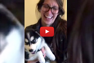 """This Amazingly Adorable Talking Husky Knows How to Say """"Mama!"""""""