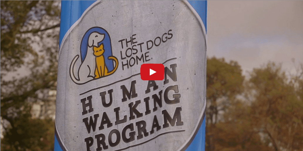This Animal Shelter is Redefining the Way We Look at Pets- What a Brilliant Idea!!