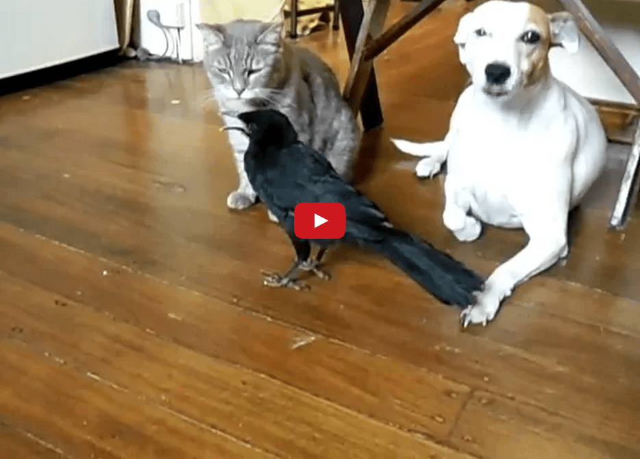 This Bird is a Responsible Pet Owner and We Appreciate That!