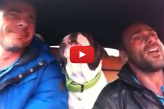 This Bulldog Singing 'You Raise Me Up' is The Cutest Thing You'll See All Day!!