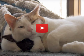 This Bunny And Kitten Love Each Other!