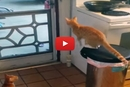 This Cat's Escape Strategy Is On Point!