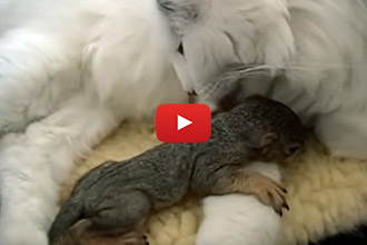 This Cat Adopts An Unlikely Baby, And Inspires A Rescue Foundation!