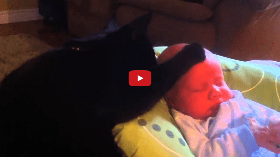 This Cat Calming a Cranky Baby is Absolutely AMAZING!!