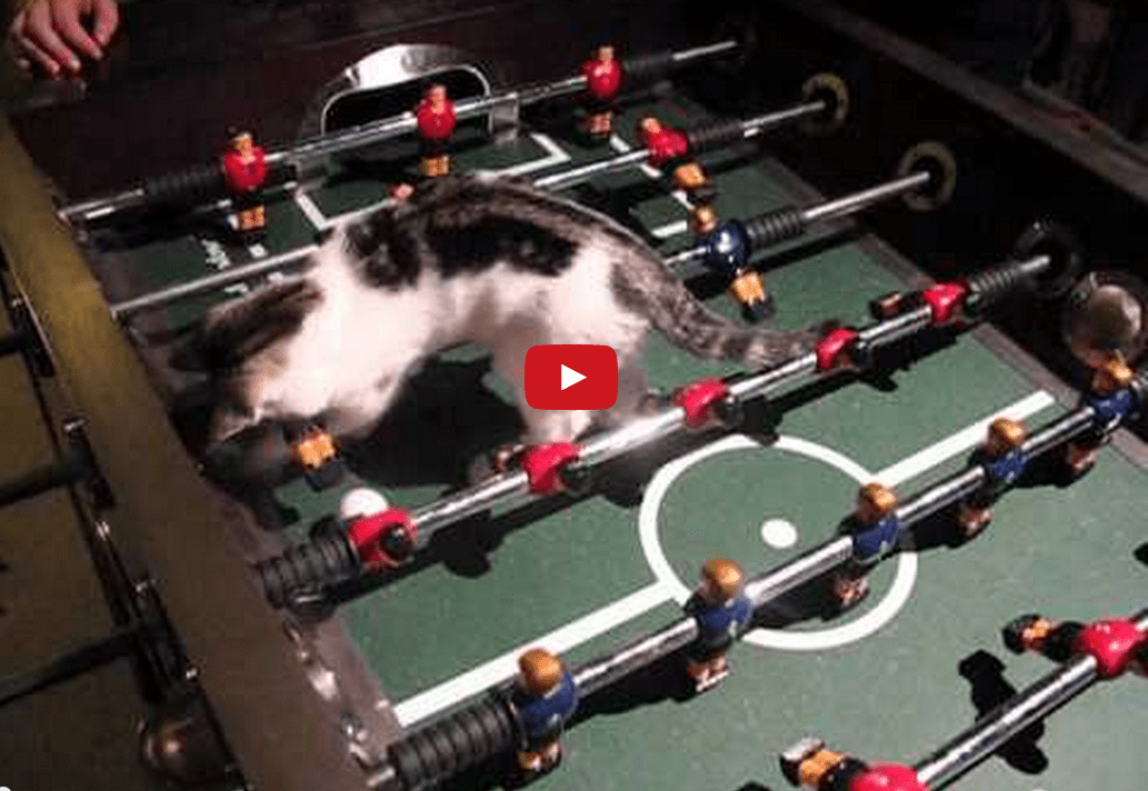 This Cat Dominates on the Soccer Field! Or At Least the Soccer Table... This Cat's a Riot!
