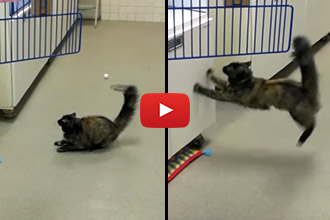This Cat is Hilariously Hindered by This Freshly Waxed Floor!