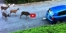 This Cat Meeting a Herd of Deer Will Remind You of the Serene Beauty of Nature's Ubiquity!