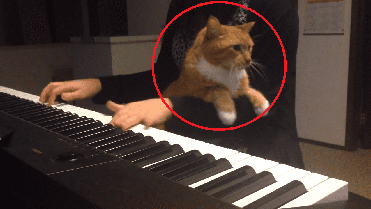 This Cat Picks the Absolute Worst Time to Cuddle- and the Result is Both Hilarious and Impressive!!