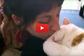 This Cat Responds To Kisses In The Cutest Way Possible!