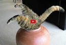 This Cat's Struggle to Enter a Clay Pot is Funnier Than it Should Be- I'm <i>Literally</i> <b>Dying</b> of Laughter!!
