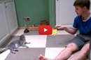 "This Cat Says, ""This Is How I Entertain My Human."""